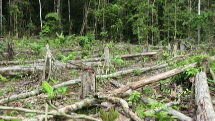 Tropical rainforest felled for slash and burn agriculturee