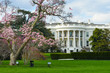 White House in Spring - Washington DC USA