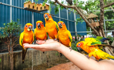 Parrots are on thr hand