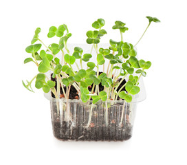 Green seedling radishes on a white background.