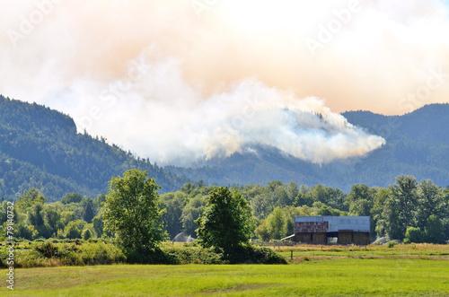 Tuinposter Rook Douglas Smoke