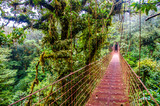 Fototapety Bridge in Rainforest - Costa Rica - Monteverde
