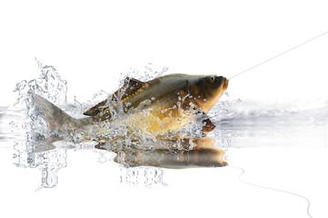 Fische 82