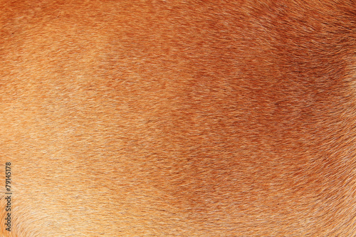 Tuinposter Wolf Fur animal