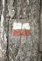 Poland flag on tree