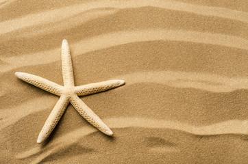 spiaggia con stella marina
