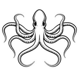 Vector octopus illustration