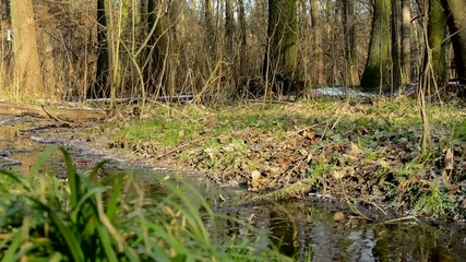brook in the forest - sunny - winter - bere trees and grass