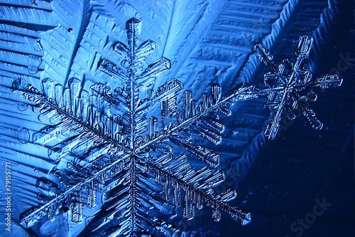 Poster Water planten snowflake crystal blue background