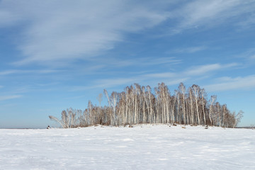 Trees on the snow-covered island