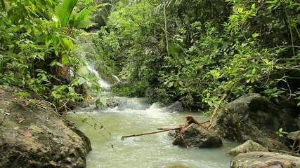 Rainforest stream in the Choco Biological Region, Ecuador