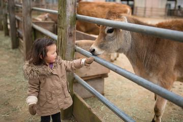 牛を撫でる子供