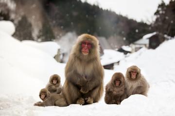 里山の親子猿