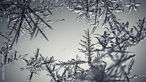 monochrome texture ice