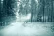 winter forest landscape monochrome