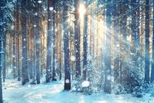 "Постер, картина, фотообои ""frosty winter landscape in snowy forest"""