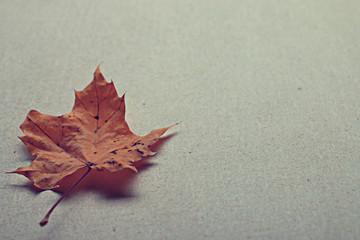 paper letter fallen leaves concept