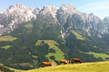 berge hütte alpen ausblick kühe idylle panorama weide gras