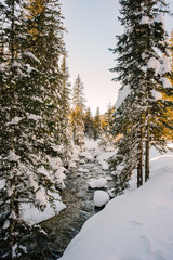 Creek in snowy forest