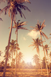 Blue cloudy sky through palm trees. Vintage filter