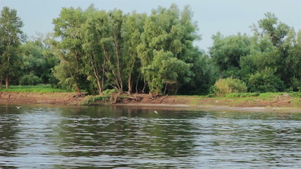 Gull near by  summer river shore