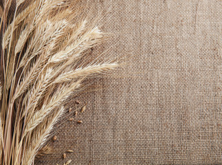 Ears of wheat and corn border burlap background