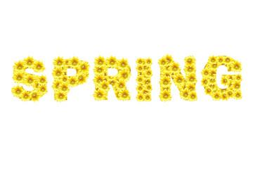 Flower symbol,SPRING, isolate on white background