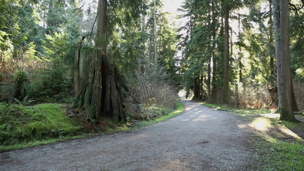 Stanley Park Forest Path, Vancouver