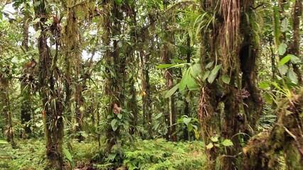 Walking through cloudforest on the Pacific coast of Ecuador