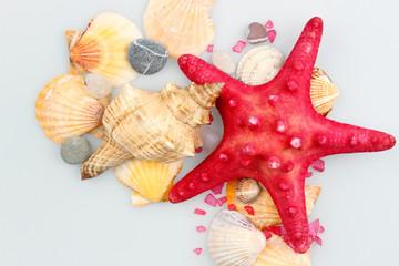 Starfish and shells