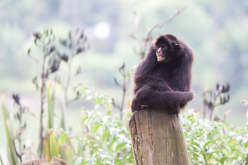 ape brazil
