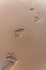 Human footprint on beach sand