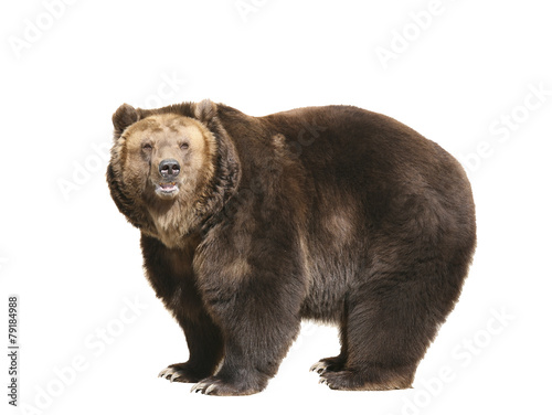 Fotobehang Oost Europa Big brown bear isolated on white background
