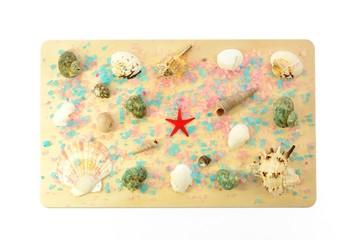 Sea shells on a wooden board