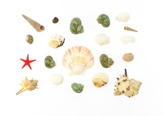 Colored sea shells and red star