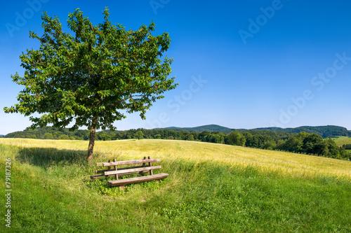 Poster Landschappen Grüne Landschaft im Odenwald