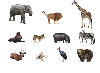 A collage of wild animals