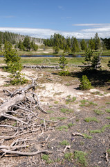 landscape in Yellowstone National Park in Wyoming
