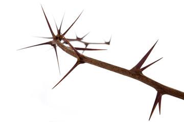 ramo di spine
