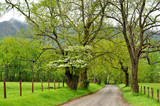 Spring along a dirt road in Cades Cove.