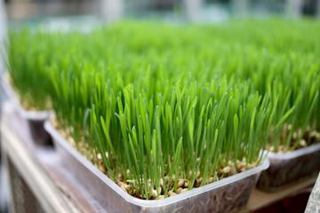 Seedlings.