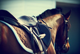 Saddle with stirrups
