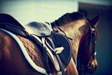 "Постер, картина, фотообои ""Saddle with stirrups"""