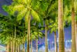 Leinwanddruck Bild - Palms in Singapore during night time