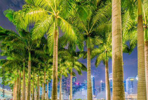 Leinwanddruck Bild Palms in Singapore during night time