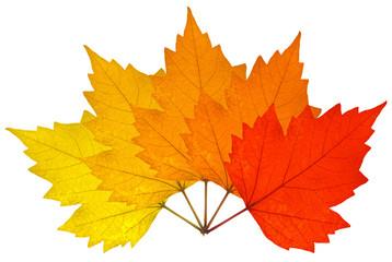 éventail de feuilles sèches d'automne
