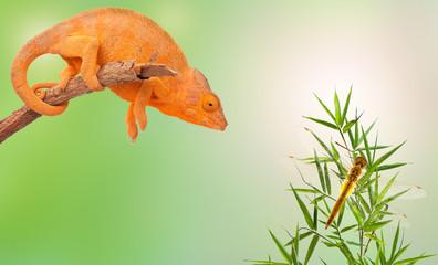 caméléon sur branche et libellule sur bambou