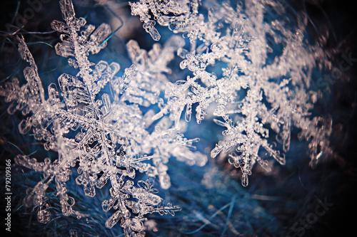 Poster Water planten snowflake crystal natural snow