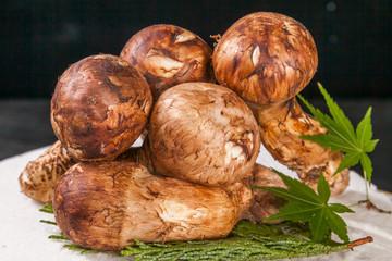 きのこ 松茸  High-quality mushroom matsutake mushroom