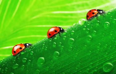 lady bug on fresh grass